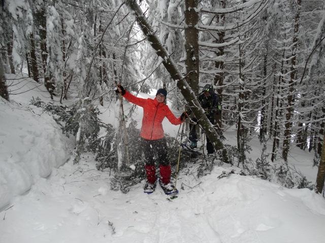 Die Schneelast bringt die Bäume zum Einstürzen