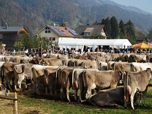 Viehausstellung 2018 Hittisau