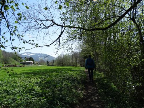 Wiesenweg entlang der Bolgenach