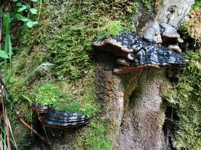 lackierte Pilze