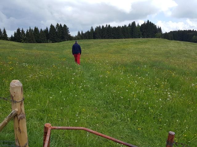 Wiesenweg oberhalb Halden