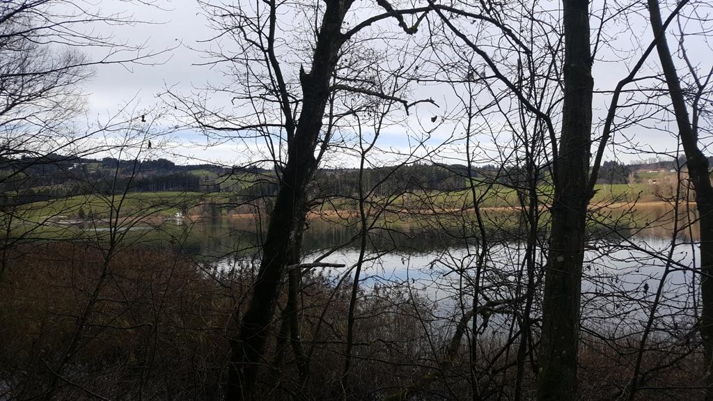 Der Niedersonthofener See im November