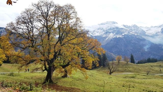 Herbstradtour Schwarzenberghütte - Ferienwohnungen Plangger