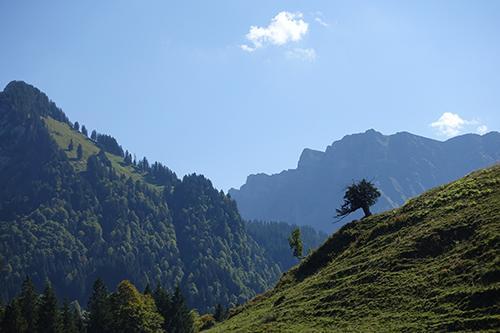 Alter Baum bei Schönenbach
